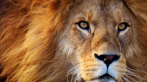 Lion Africa, Evaluation and Analysis