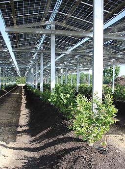 Kooperation Irrigation Netz EWIA_hoch.png