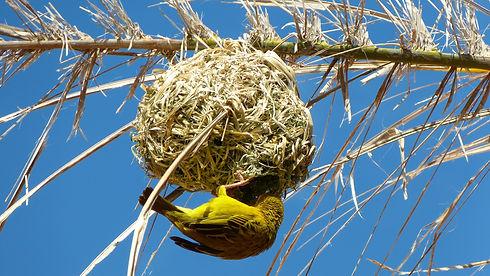 Bird nest construction