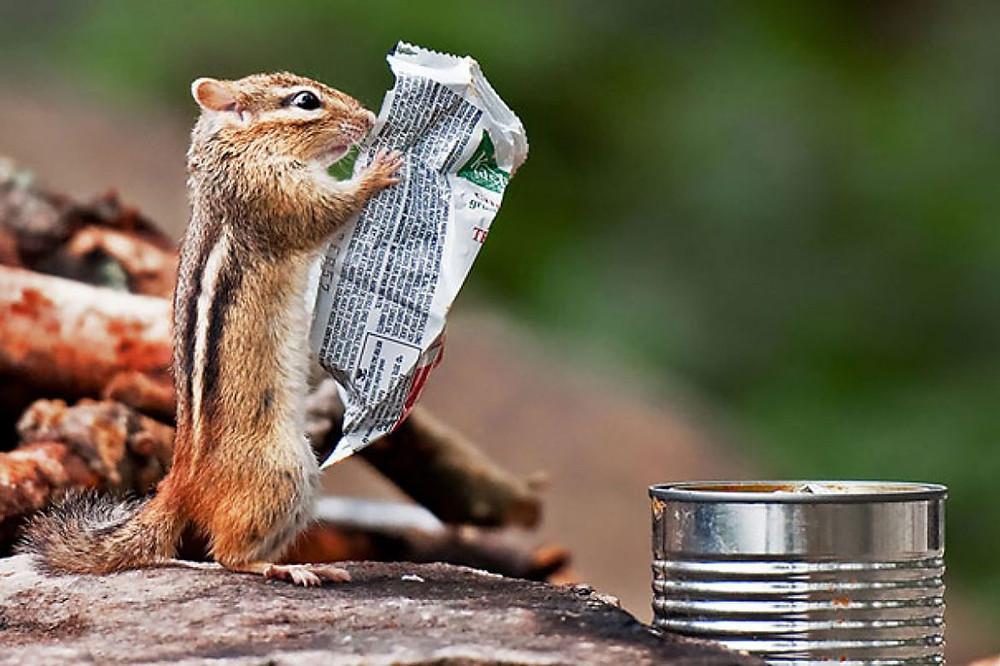 Squirrel finds a treat