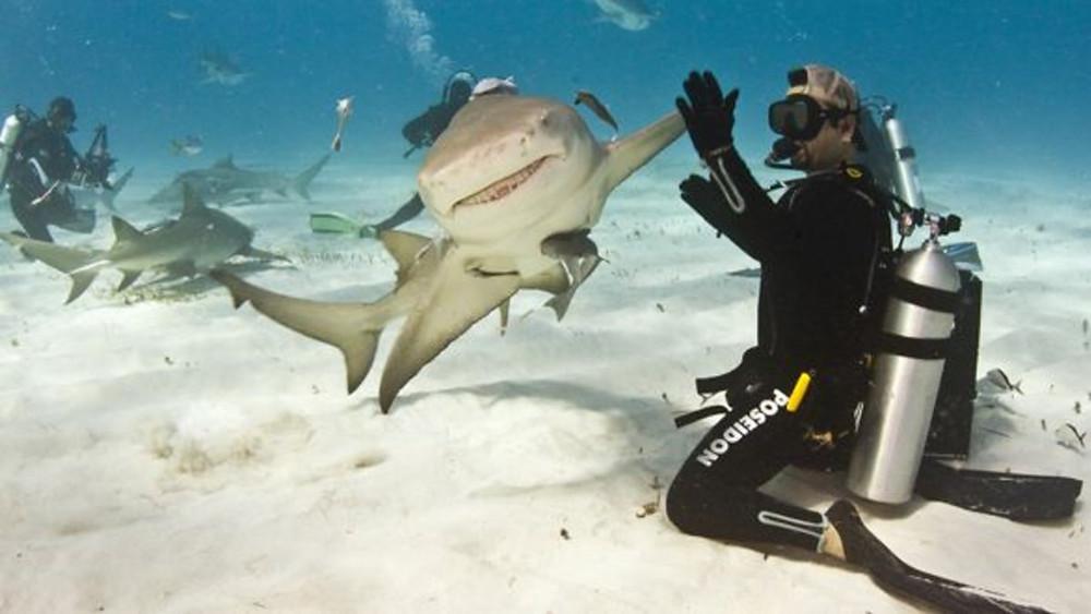 Shark high-five