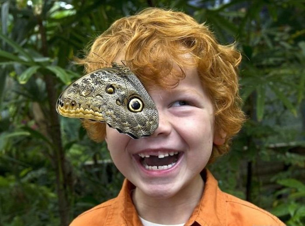 Boy and a butterfly