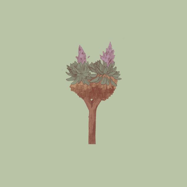 Giant Groundsel