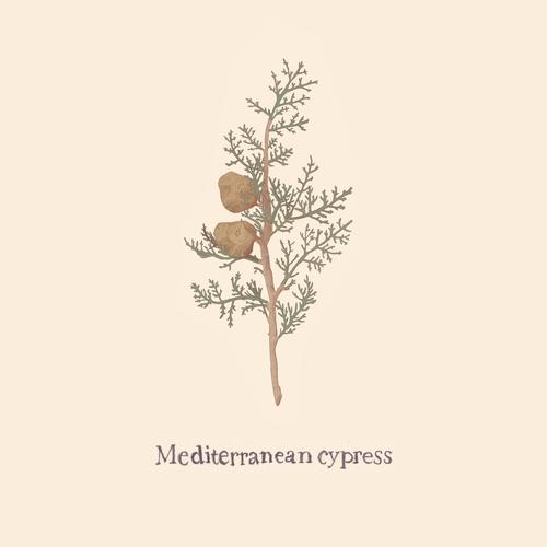 Cypress.png