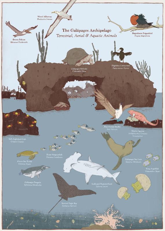 Galapagos2.jpg