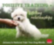 dog-positive training.jpg