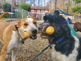 Dog buddies.jpg