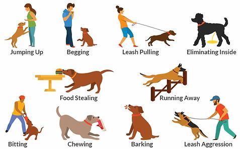 dog-behavior-problems.webp