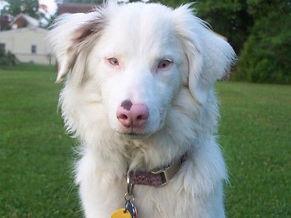 blind dog.jpg