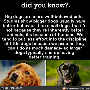 Big dogs are trained better.png