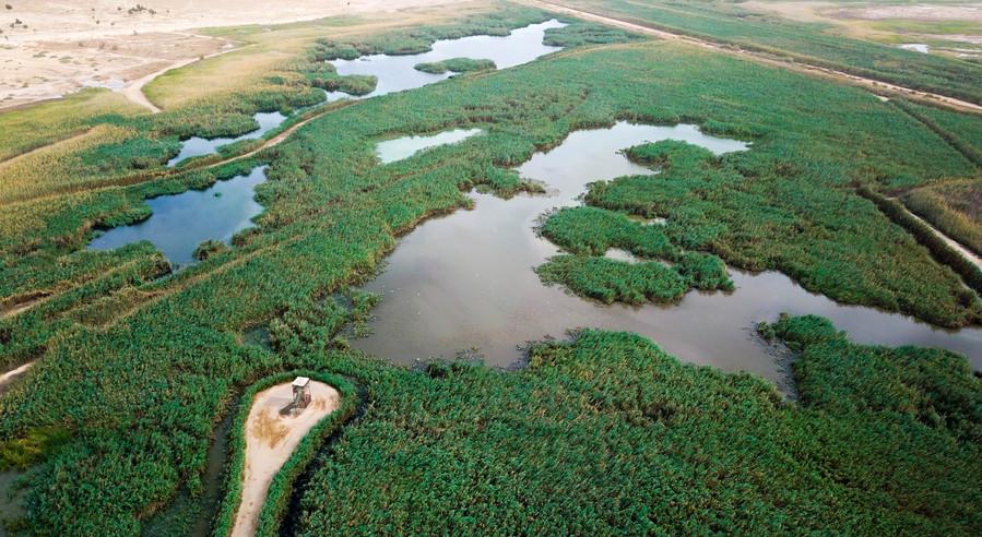 Al Jahra Nature Reserve