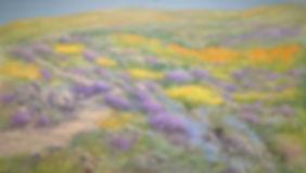 1._Namaqualand_Springtime_Wonderland_-_9
