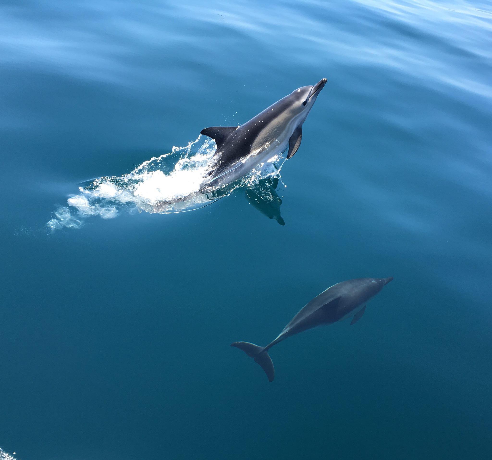 2 hour Dolphin and Marine Sea Safari