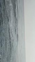 Dolphin Watch Uk BRIXHAM White Beaked do