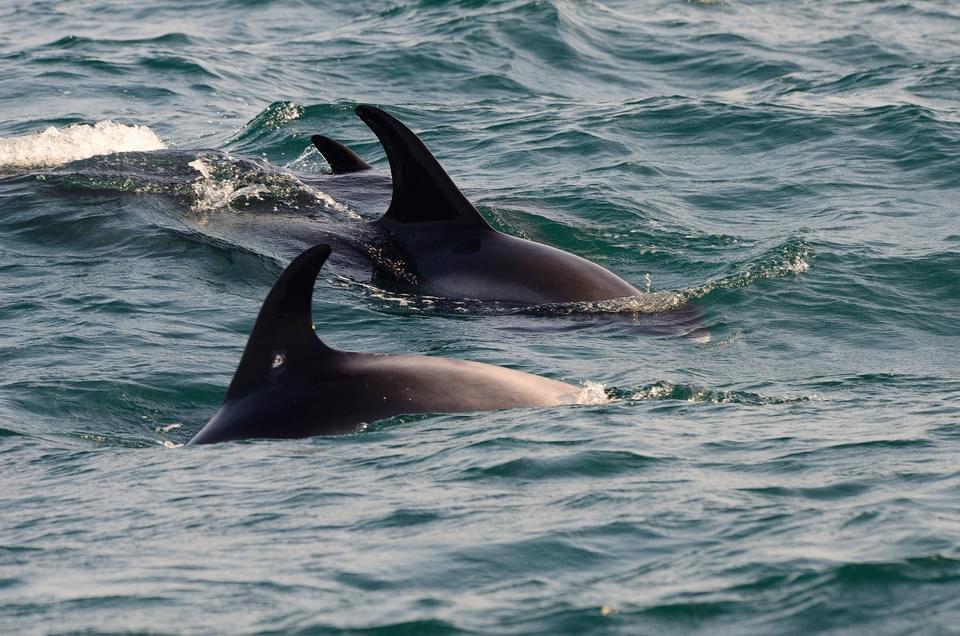 1/2Day AM Dolphin and Marine Life Safari