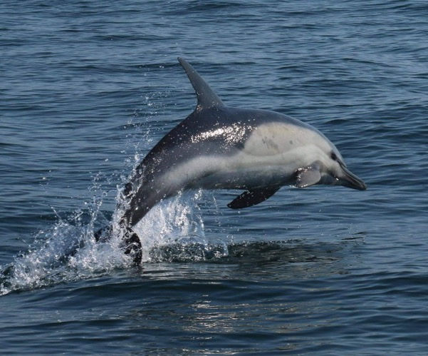 Evening Dolphin,Marine Life & Bay Cruise