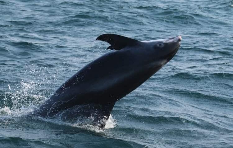 1/2Day PM Dolphin and Marine Life Safari