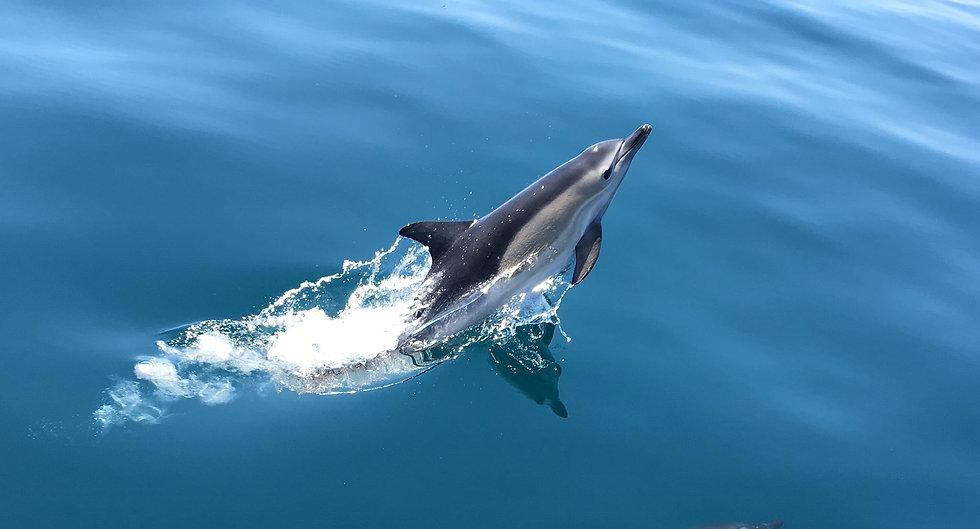 Dolphin%20Watch%20UK_edited.jpg