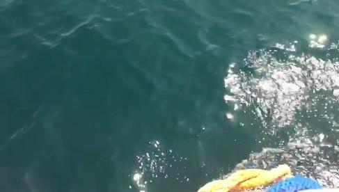 Dolphin Watch UK