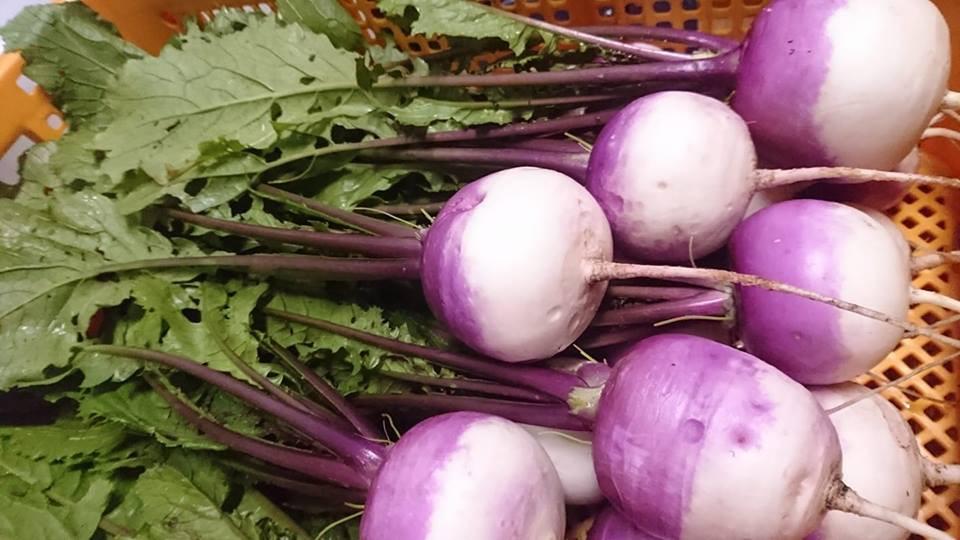 旅風農園さんの野菜