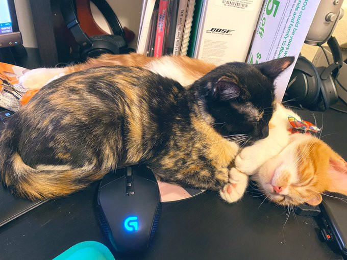 Two kittens cuddled up on a computer desk