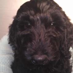 Ernie (red) 9 weeks