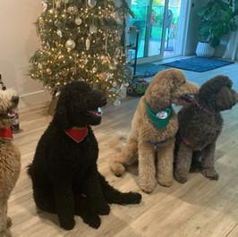The whole gang - Christmas 2020