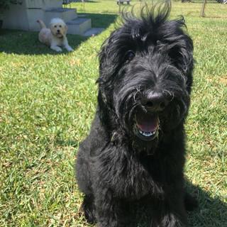 Roxy with her buddy Yogi