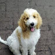 Winnie as a pup