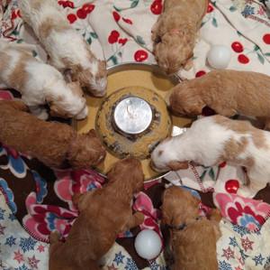 Winnies pups 3 weeks