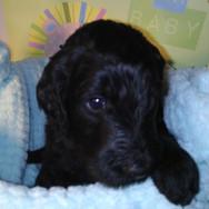Ernie 4 weeks