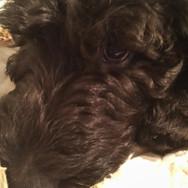 Ernie 11 weeks