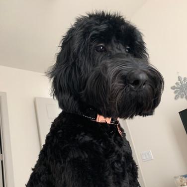 Winnie 6/2019