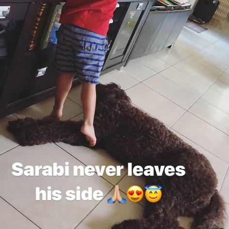 Grown Sarabi