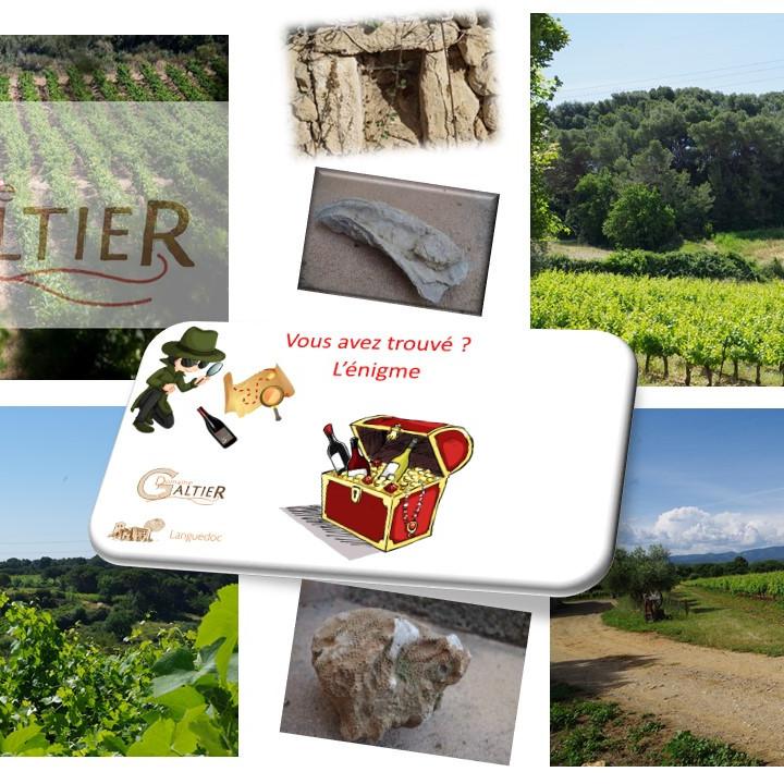 Chasse aux trésors dans les vignes