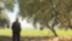 """אמנון חר""""ג בכניסה לכרם הזיתים תצלום לכיוון מזרח , בצד סולם נשען על עץ זית"""