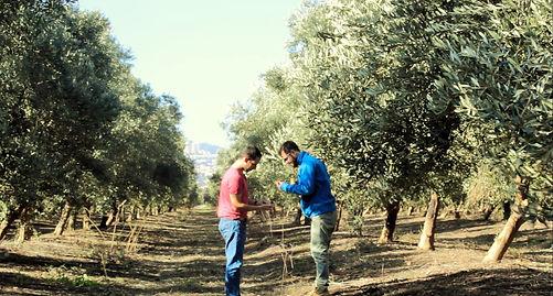 """רן חר""""ג מארח בכרם הזיתים הזיתים המשפחתי של המשפחה בכפר חסידים. בתמונה רואים את הרי הכרמל באופק, מבעד לעצי הזית בכרם"""