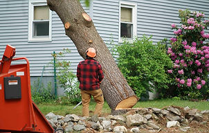 Tree and Stump Removal 1.jpg