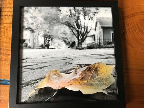 Lockerbie Leaf