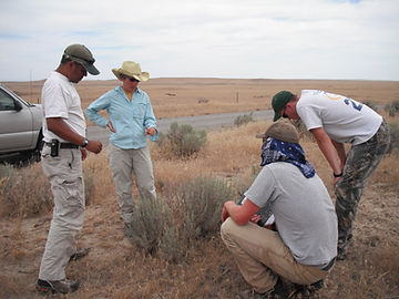 The UI Sagebrush Team takes a closer look at cheatgrass invading the Owyhees, Summer 2011