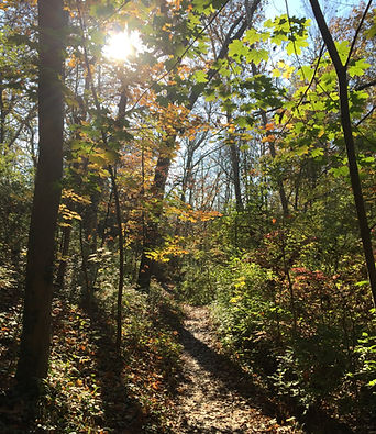 Fall in Silvoor Biological Sanctuary