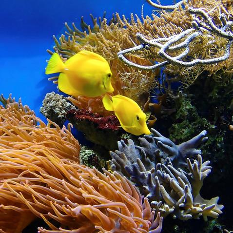 coral-1355474_1280.jpg