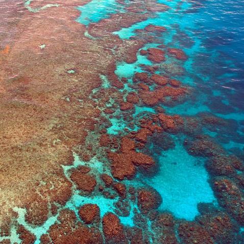 great-barrier-reef-261726_1280.jpg