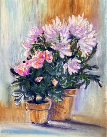 Розовые цветы в горшках