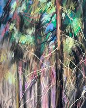 Ранняя весна в еловом лесу