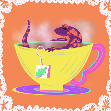 Salamander Tea