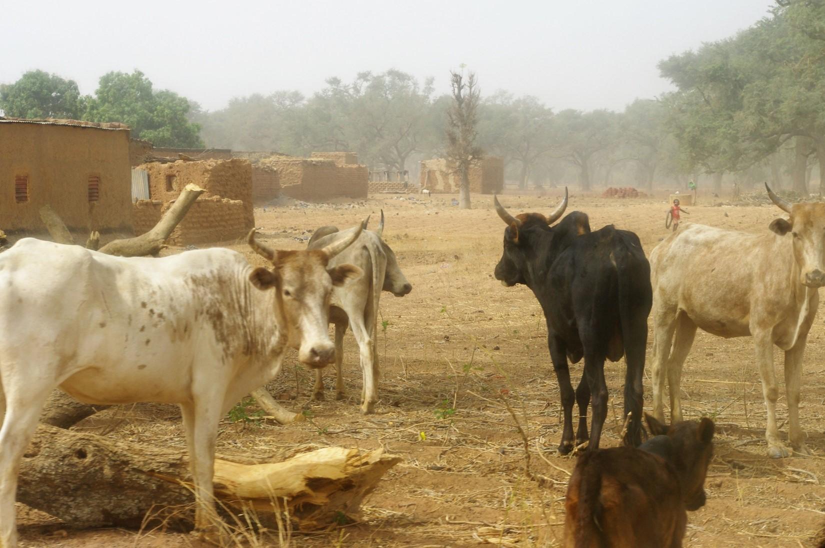 Village_de_Safané