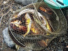 рыбалка орлан