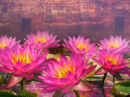 A Flower Teaches Us