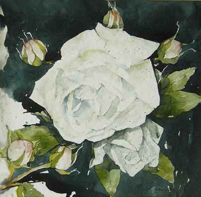 Rose weiß II
